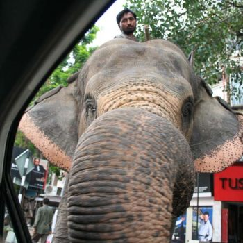 INDIEN-Mumbai-Elefant in Bandra auf der Linking Road