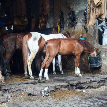 INDIEN-Mumbai-Pferdestall im Rotlichtmilieu