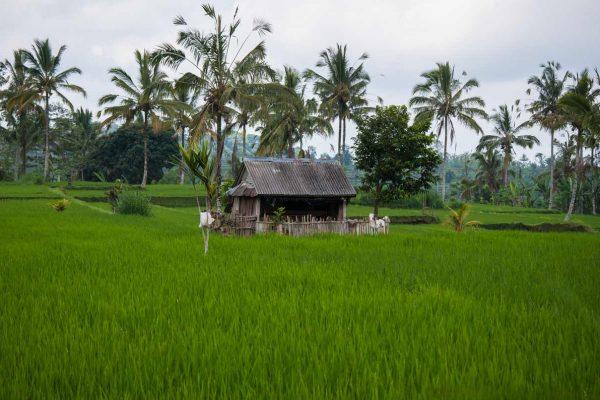 Indonesien-Bali-Temple Gaben