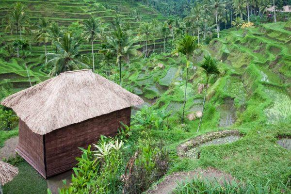 Indonesien-Bali-Reisterrassen