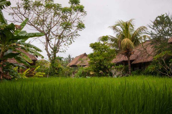 Indonesien-Bali-Hotel im Reisfeld
