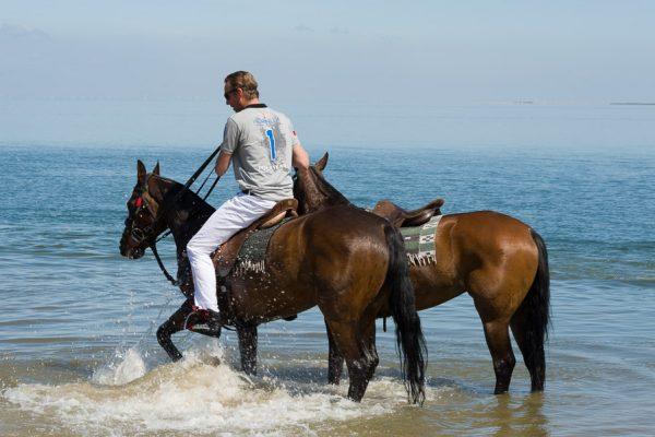 Deutschland-Sylt-Hörnum-Polopferd zum Abkühlen im Meer