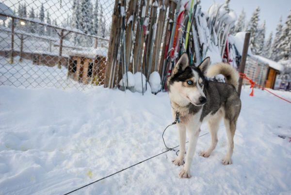 Schweden-Kiruna-Base Camp mit Husky