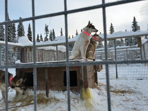 Schweden-Kiruna-Base Camp mit Huskys