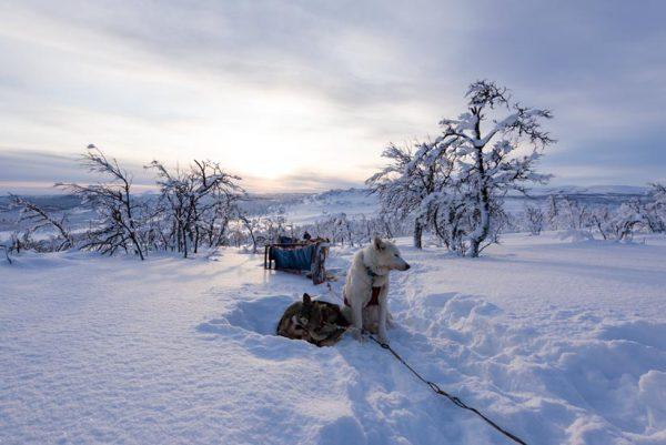 Schweden-Kiruna-Pause bei der Schlittenfahrt