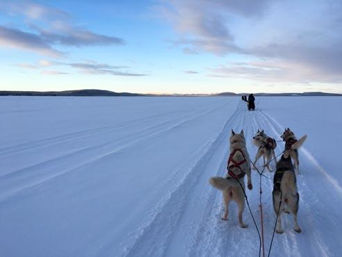 Schweden-Kiruna-Schlittenfahrt
