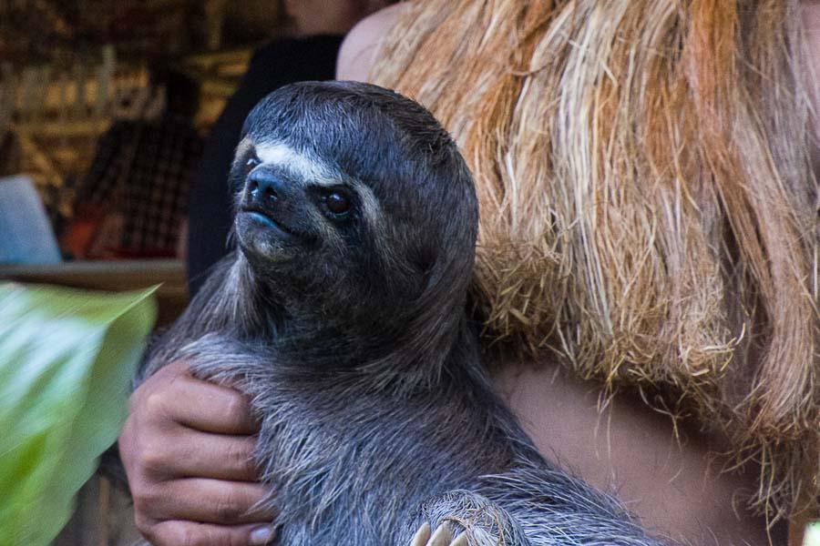 Die lange Reise auf dem Amazonas – Teil 2 von Manaus nach Iquitos