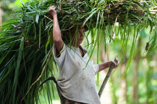 Indonesien-Bali-Bäuerin mit Machete