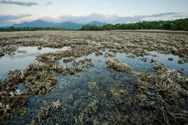 Indonesien-Bali-Korallen bei Ebbe
