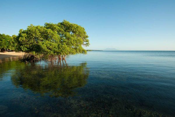 Indonesien-Bali-Mangroven
