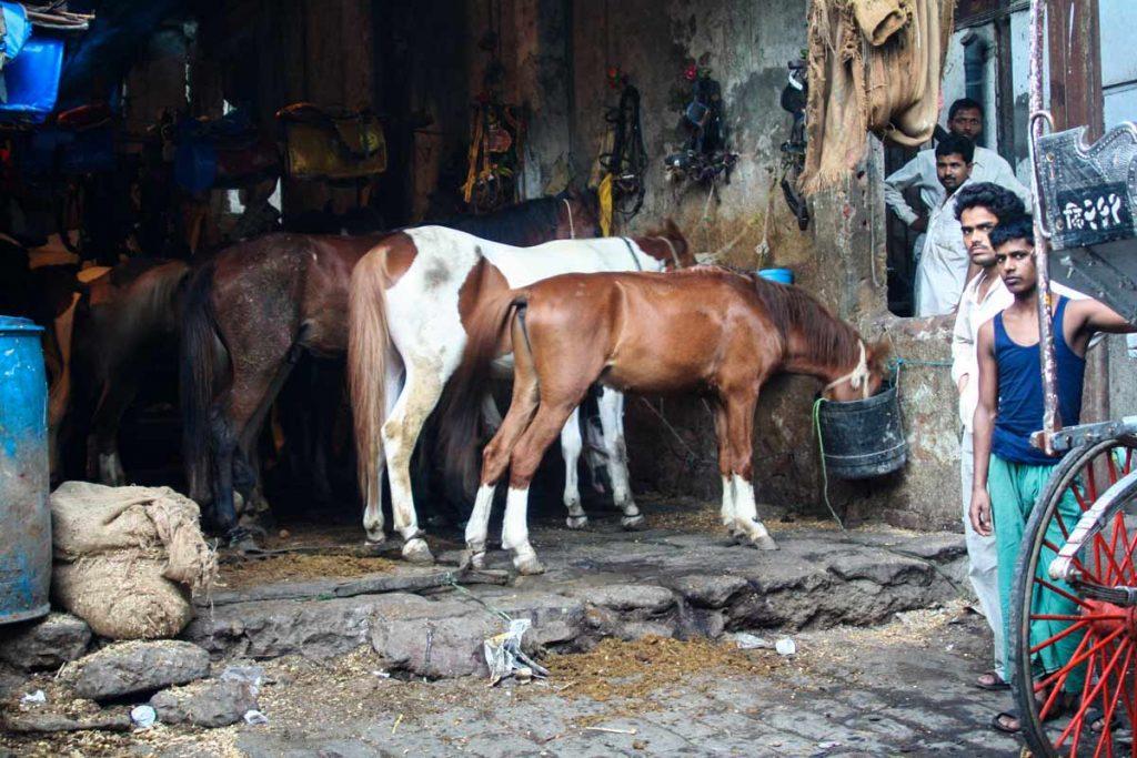 INDIEN-Mumbai-Pferdestall im Rotlichtviertel