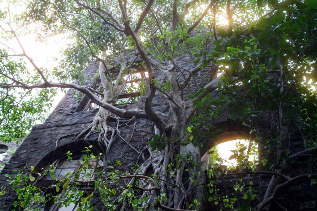 INDIEN-Mumbai-die Natur holt sich Woollen Mill zurück