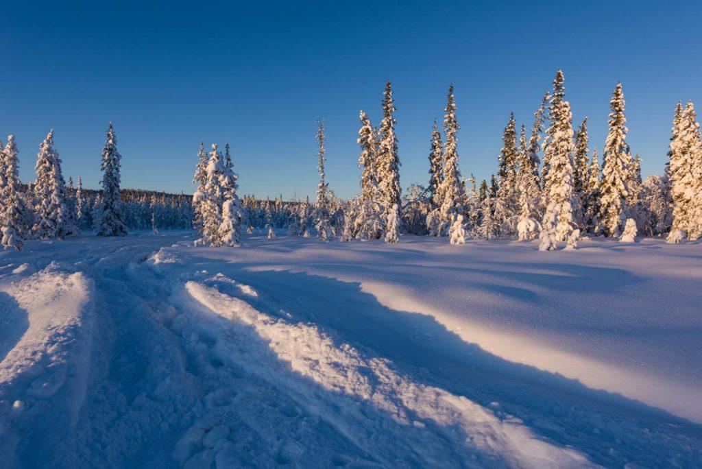 Schweden-Kiruna-Winterstimmung im Wald