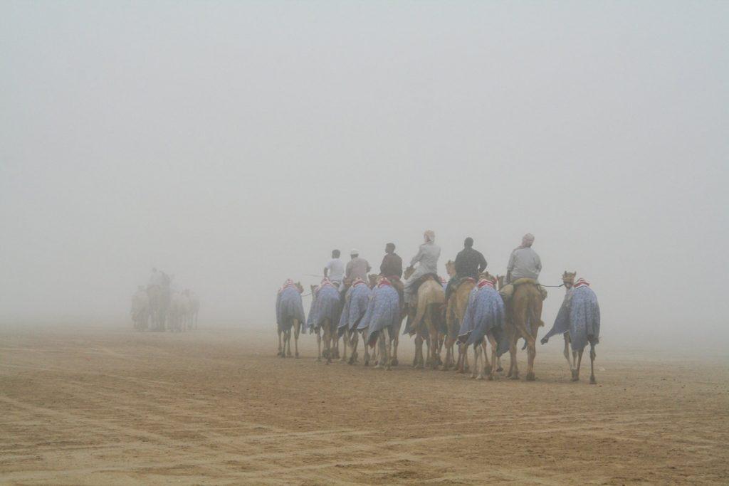 VAE-Dubai-Kamele im Morgennebel